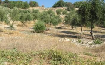 picture of pkam181 Plot with country views and olive trees near Kamilari